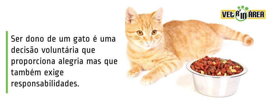 capa_tenho_gatinho_img