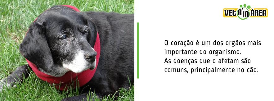 capa_coracao_img